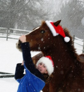 Snow at Stable
